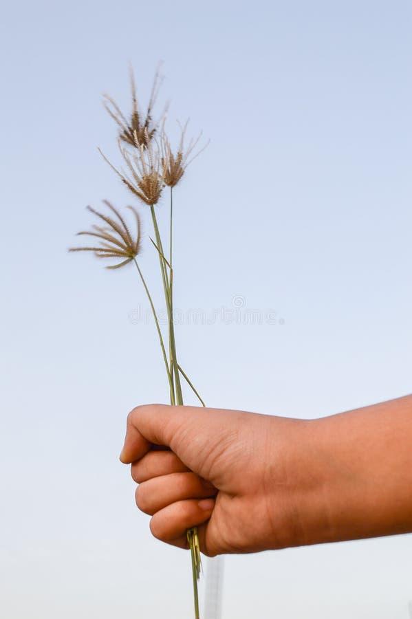 在男孩手上的圆鼓的手指草 库存图片