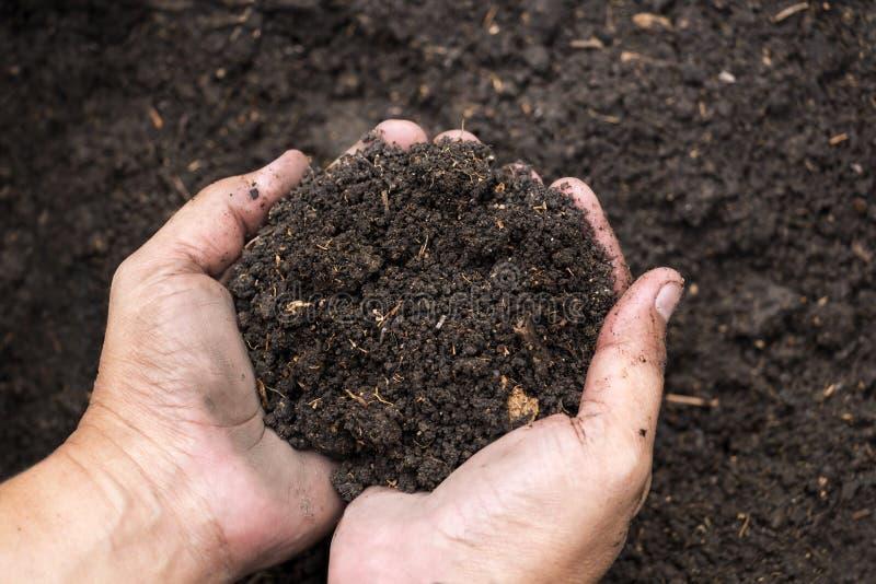 在男性的土壤递农业,从事园艺或者ecolog的` s农夫 库存照片