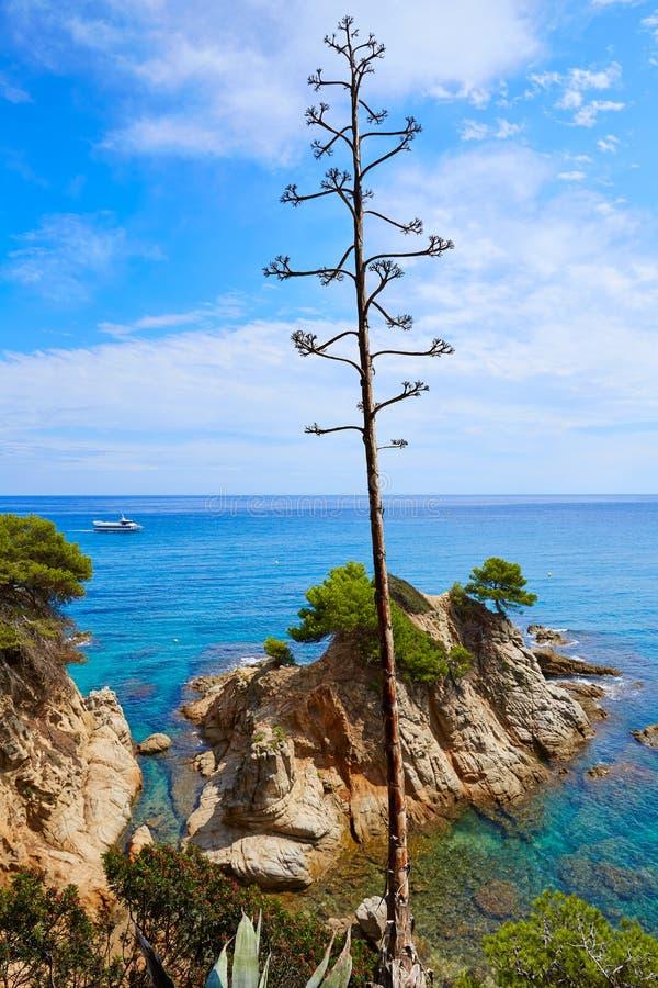 在略雷特德马尔肋前缘Brava的Platja Fenals海滩 库存图片