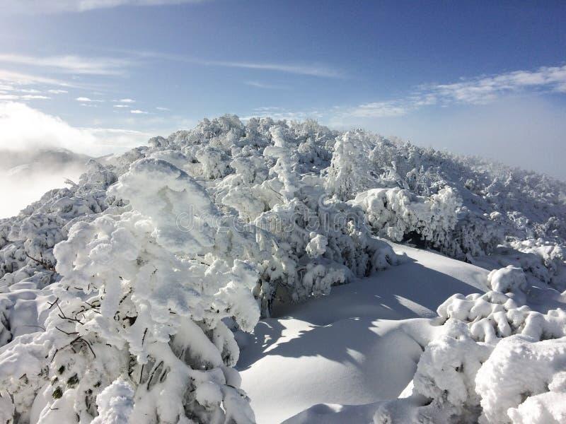 在登上的上面的斯诺伊森林,利古里亚亚平宁山脉 免版税库存照片