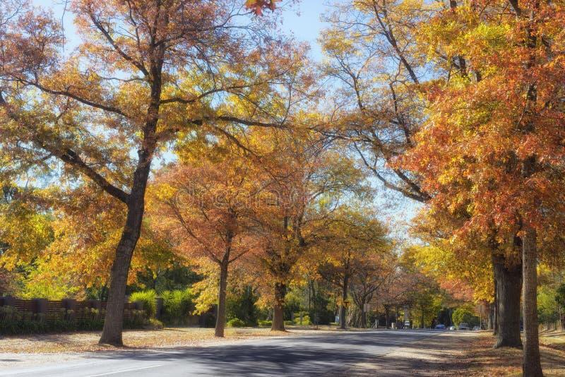 在登上Macedon的秋天树 免版税库存照片