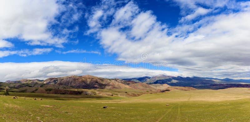 在登上Sukor附近的山风景在阿尔泰 库存图片