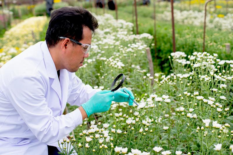 在白天,有白色实验室褂子分析的亚裔科学家人和记录白色和多色花数据在庭院里 库存照片