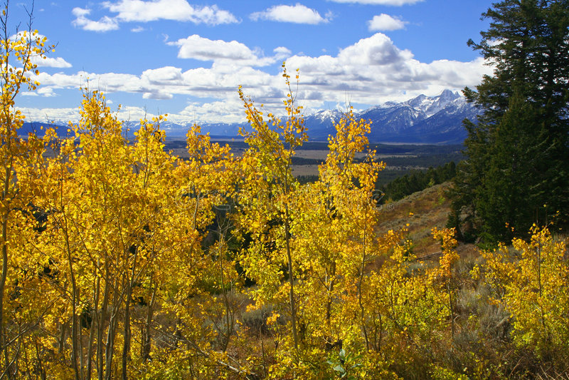 在白杨木结构树谷黄色之上 免版税图库摄影