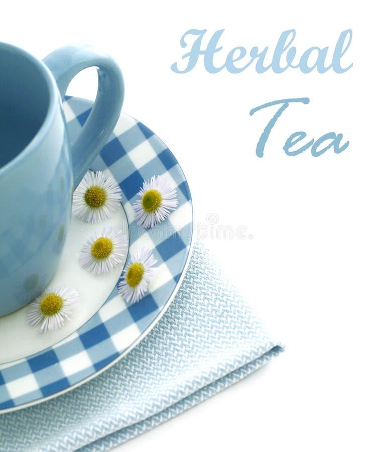 在白的清凉茶和春黄菊查出的杯子 免版税库存照片