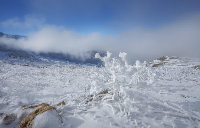 在白种人山的冬天场面 库存图片
