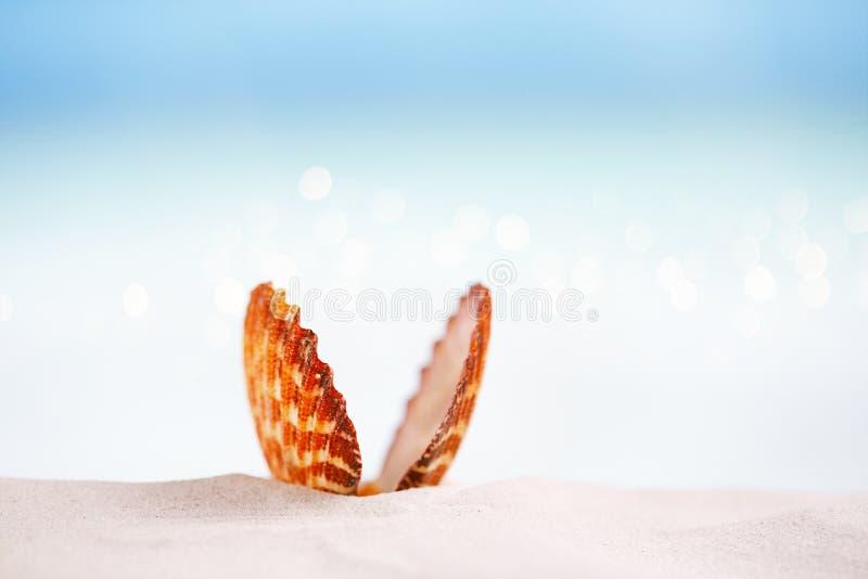 在白色佛罗里达海滩沙子的热带海壳在太阳锂下 免版税库存图片