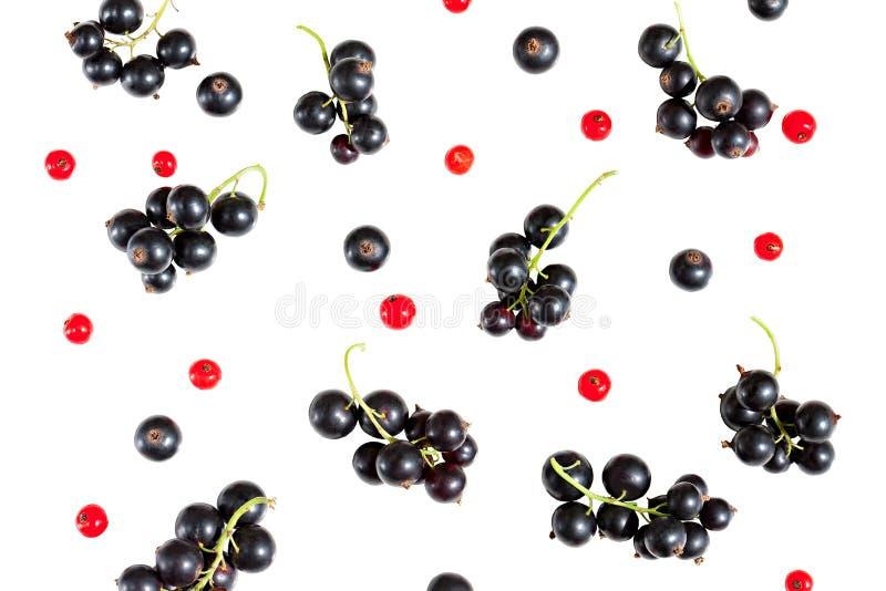 在白色后面隔绝的黑醋栗和红浆果莓果  库存照片