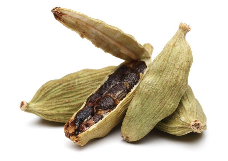 在白色和种子隔绝的豆蔻果实荚 库存照片