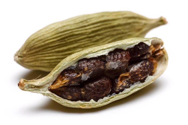 在白色和种子隔绝的豆蔻果实荚 库存图片