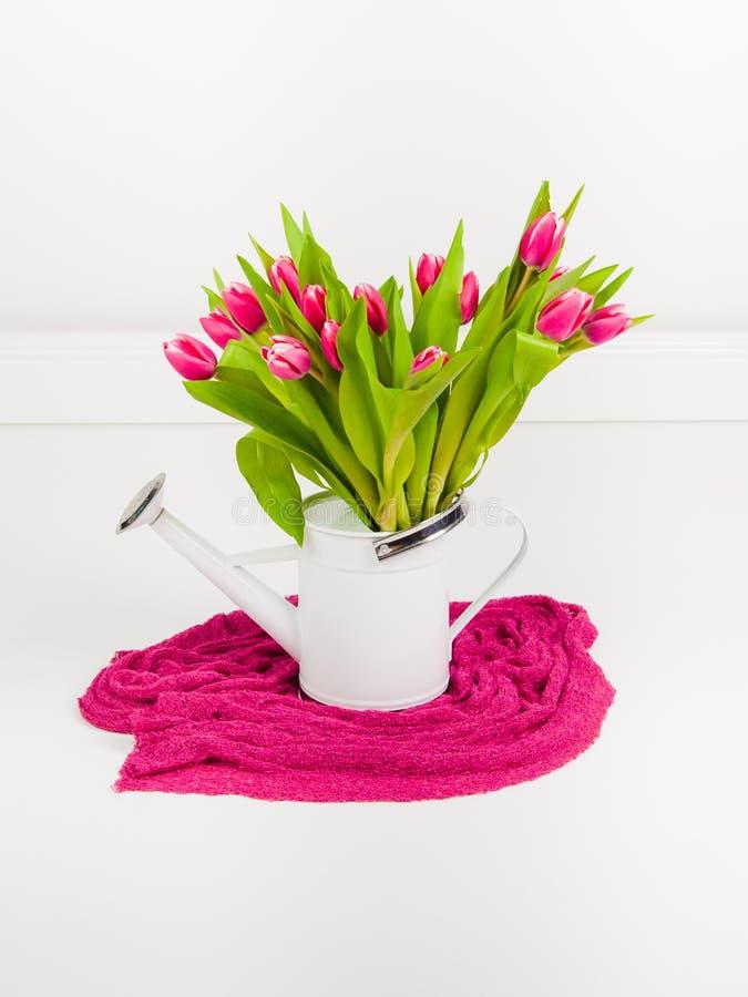 在白色喷壶的桃红色郁金香 库存图片