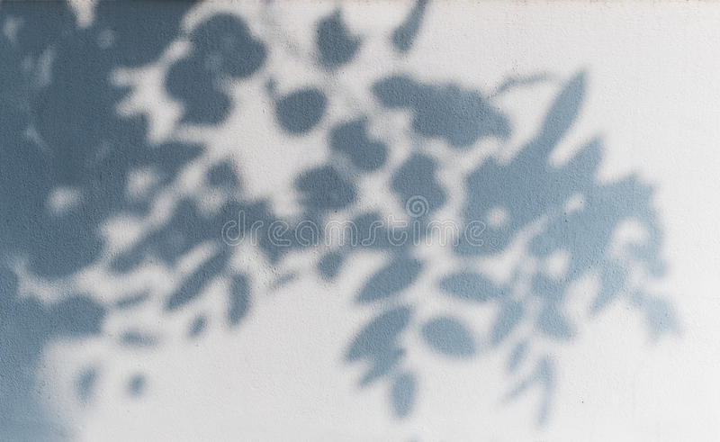 在白色墙壁上的树阴影 免版税库存照片