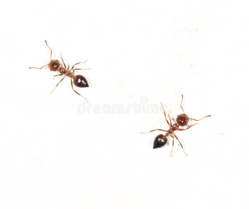 在鲨鱼镜头上的特写关闭.端子蚂蚁,动物区系.墙壁齿白色宁波图片