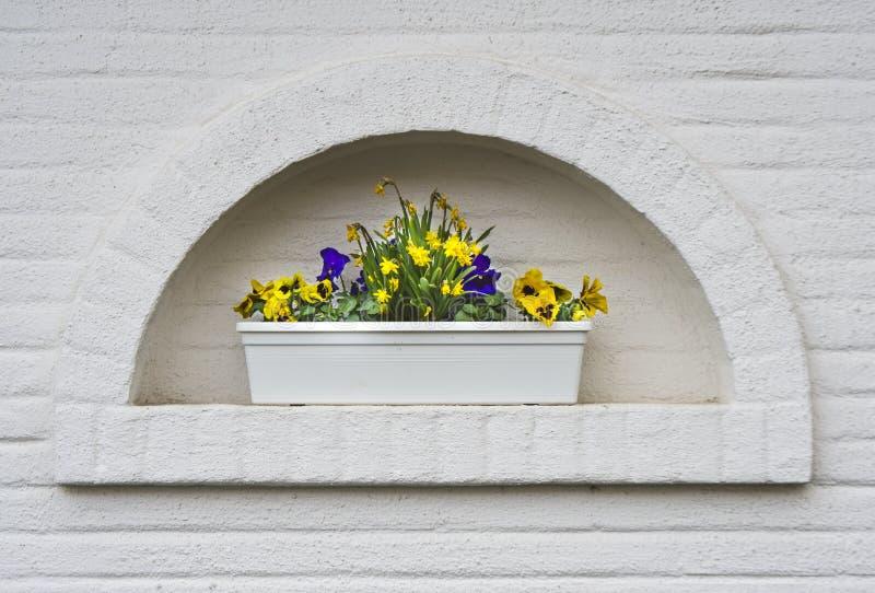 在白色墙壁上的被构筑的庭院花盆 免版税库存图片