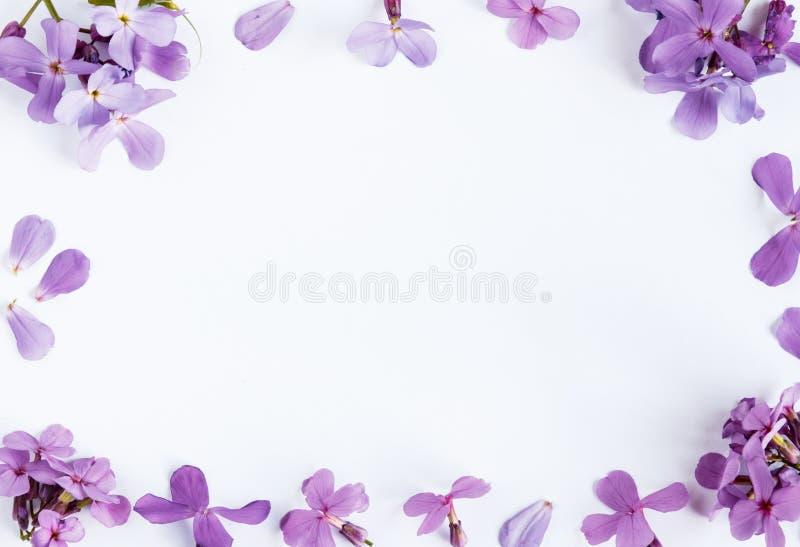 在白色大理石背景的紫色花与文本的室 免版税库存图片