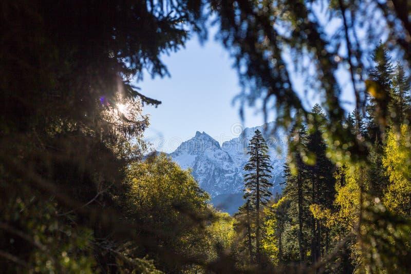 在白色山峰的美丽的景色通过绿色树窗口 库存图片