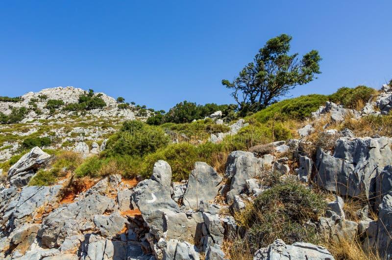 在白色岩石和灌木的看法拉西锡州,克利特 免版税库存图片