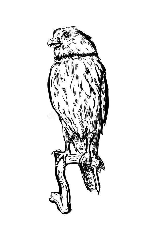在白色开会的手拉的传染媒介鸟在分支 库存例证