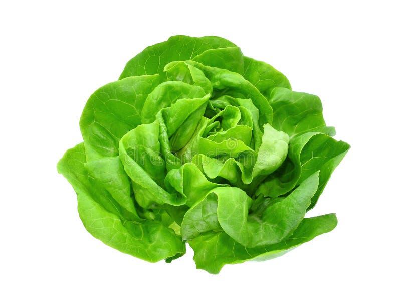 在白色或沙拉隔绝的绿色黄油莴苣菜 库存照片