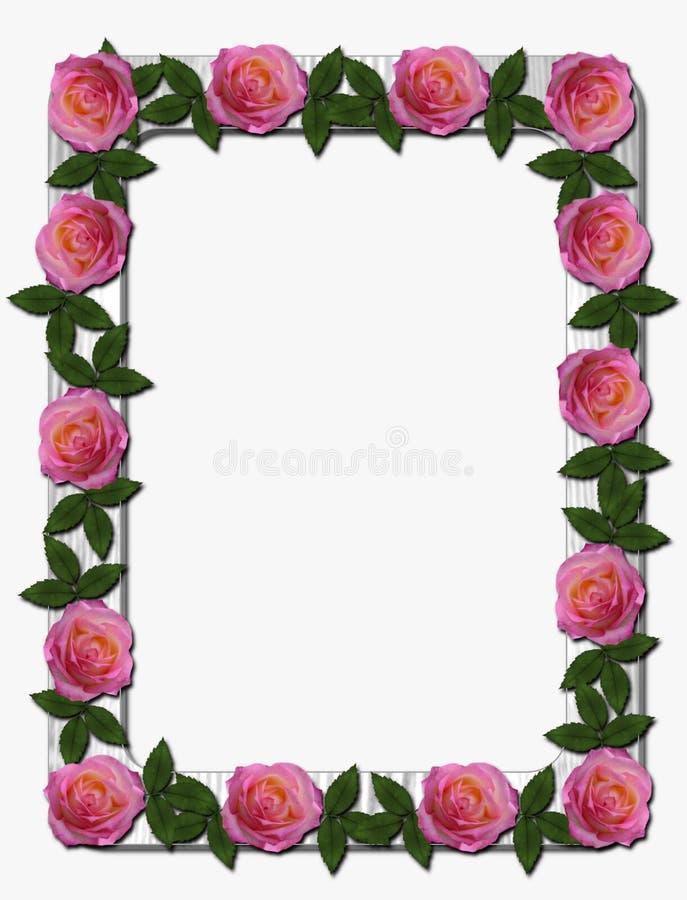 在白色木制框架的桃红色玫瑰 库存例证