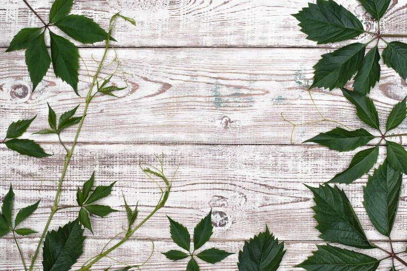 在白色木桌上的绿色叶子 顶视图 库存图片