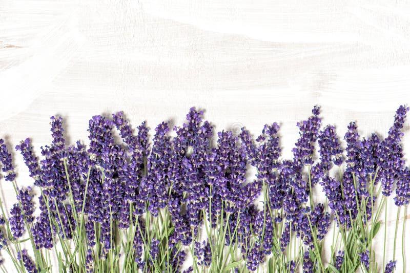 在白色木纹理背景的淡紫色花 库存图片