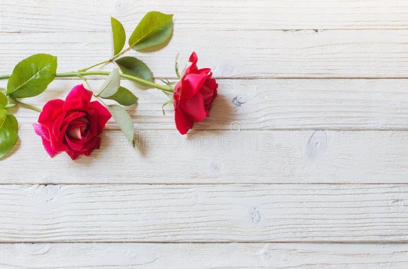 在白色木背景的玫瑰 库存照片