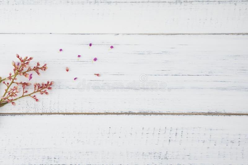 在白色木头的桃红色阳桃花 免版税库存图片