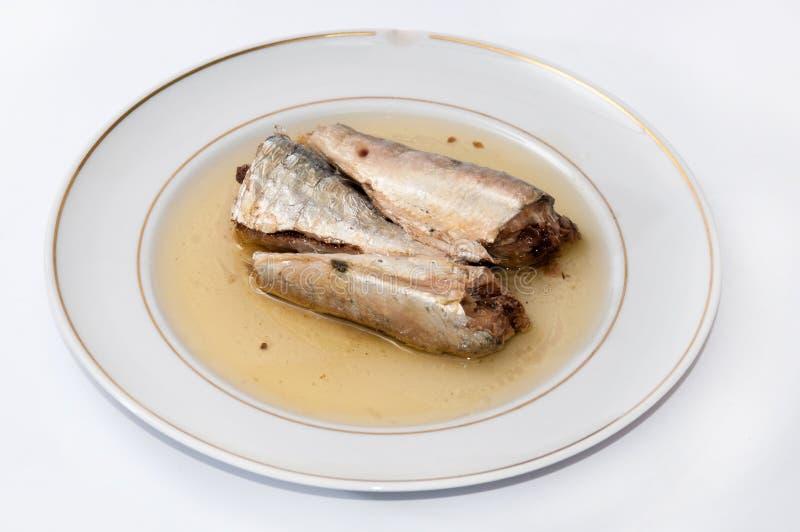 在白色板材供食的沙丁鱼 免版税图库摄影