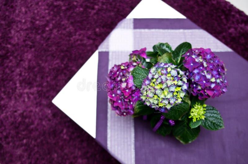 在白色桌上的八仙花属 免版税库存照片