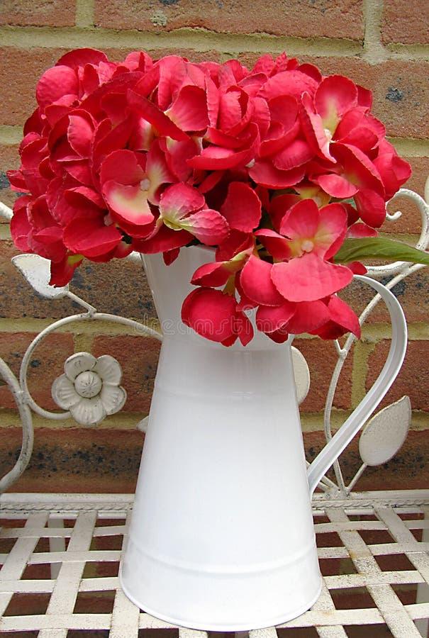 在白色水罐的人为红色八仙花属 免版税库存照片
