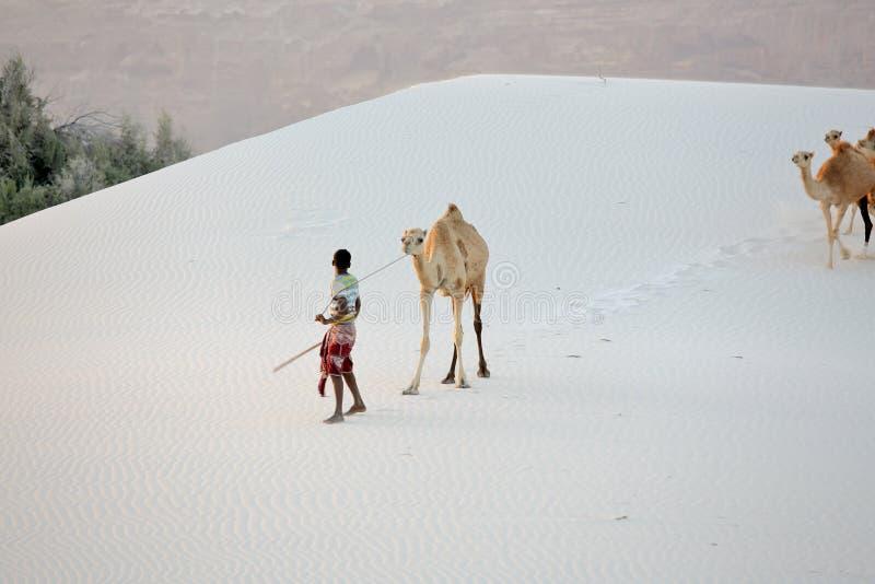 在白色沙丘的Cameleer 库存照片