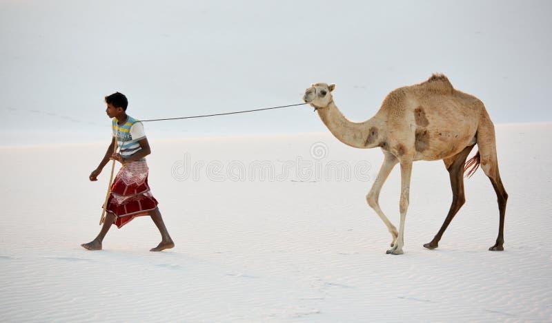 在白色沙丘的Cameleer 库存图片