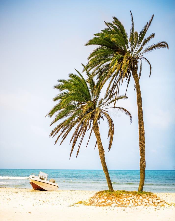 在白色沙子海滩和快速汽艇的棕榈树 库存图片