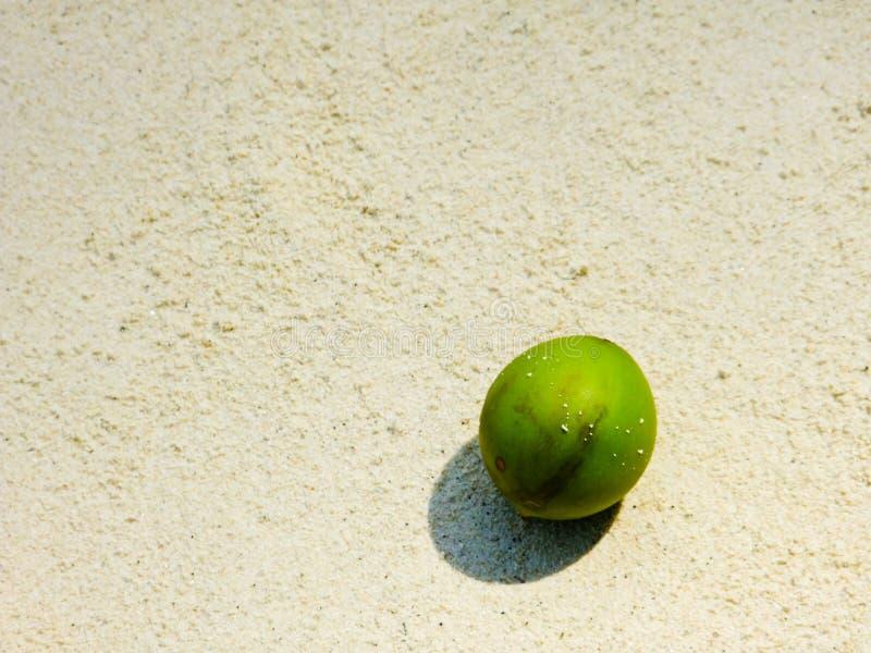 Download 在白色沙子海滩的绿色椰子 库存照片. 图片 包括有 对象, 茶点, 健康, 回归线, 夏天, 旅游业, 室外 - 30329660