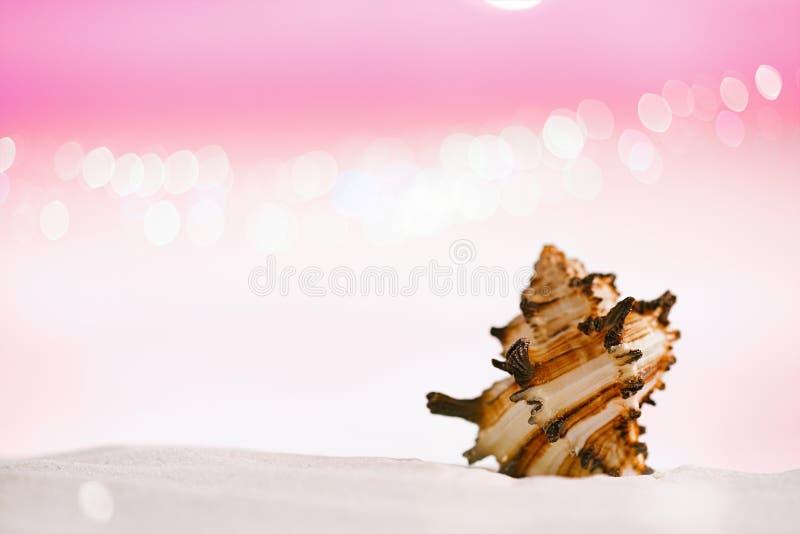 在白色沙子的明亮的热带海壳与欢乐的闪烁bac 库存照片