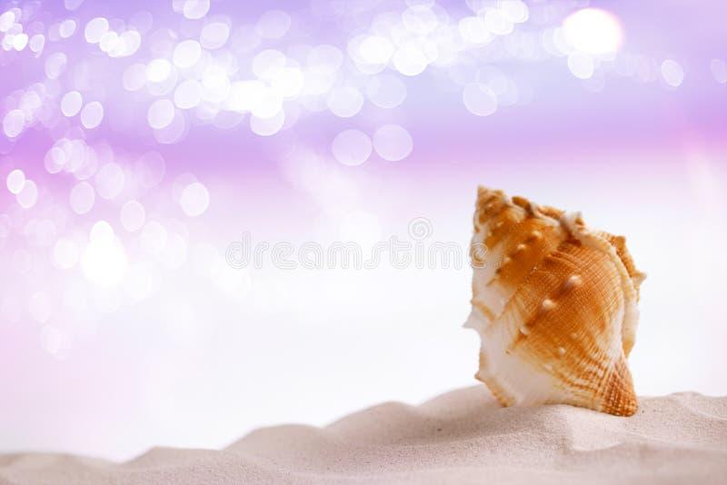 在白色沙子的明亮的热带海壳与欢乐闪烁 库存图片