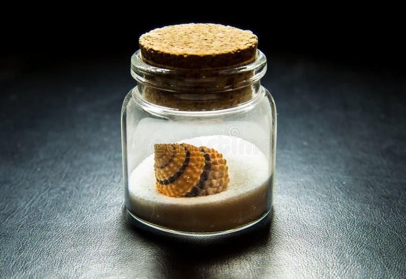 在白色沙子的美好的海壳在透明度瓶 免版税库存图片
