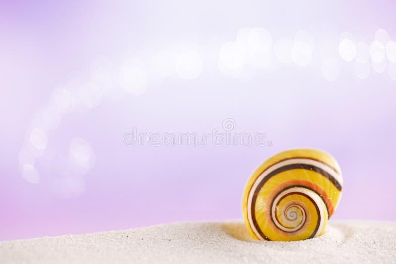 在白色沙子的被剥离的海壳有欢乐闪烁背景 库存图片