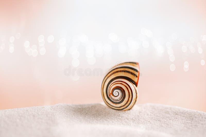 在白色沙子的被剥离的海壳有欢乐闪烁背景 免版税库存照片