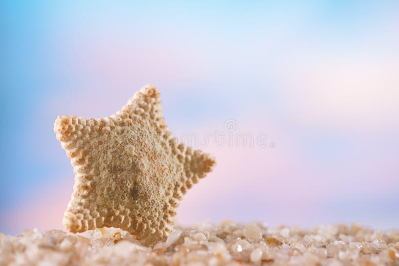 在白色海洋海滩的海星 免版税库存照片