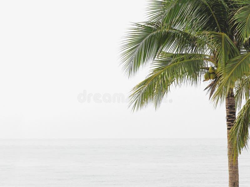 在白色海滩的椰子树 免版税库存图片
