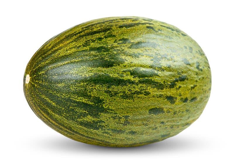在白色的一个新鲜的整个Piel de sapo瓜 免版税库存图片