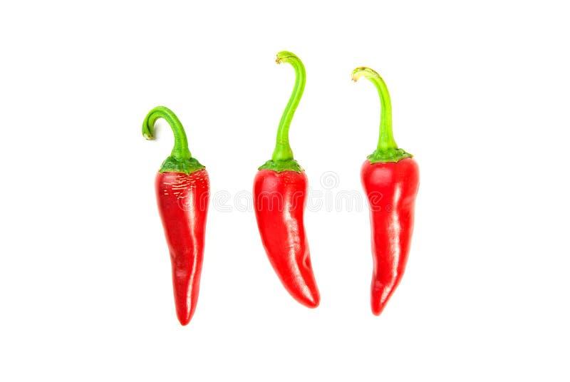 在白色的三个成熟红辣椒 图库摄影
