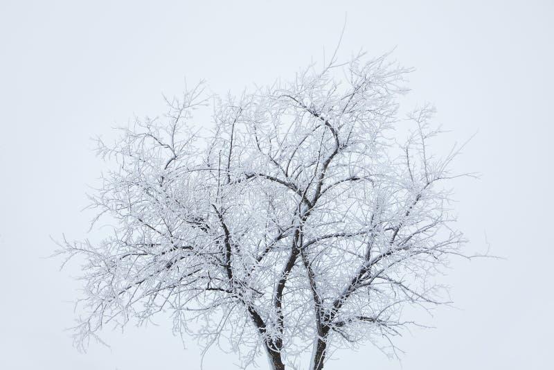 在白色的冬天结构树 免版税库存照片
