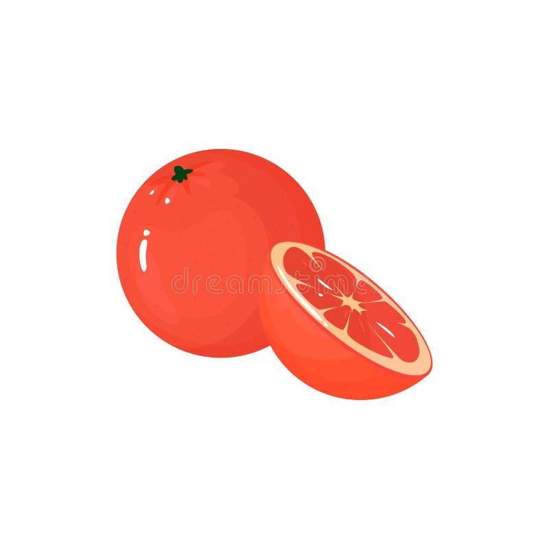 在白色的动画片新鲜的葡萄柚被隔绝的象 向量例证