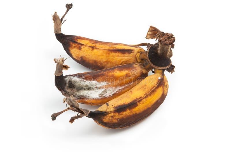 在白色的发霉的香蕉 库存照片