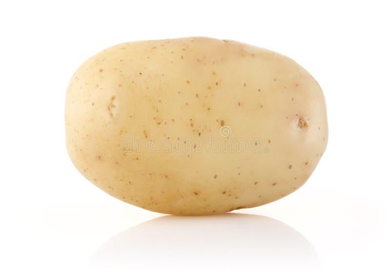 在白色的土豆 库存照片