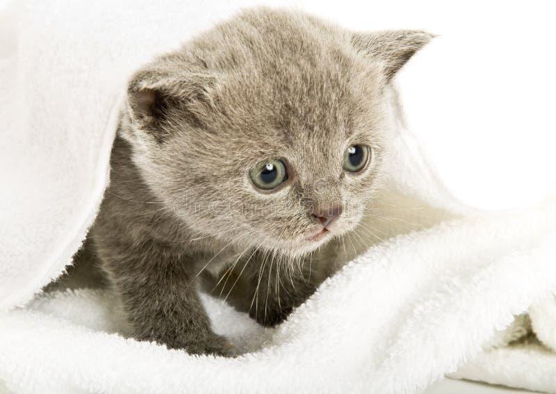 在白色的小猫 免版税库存照片