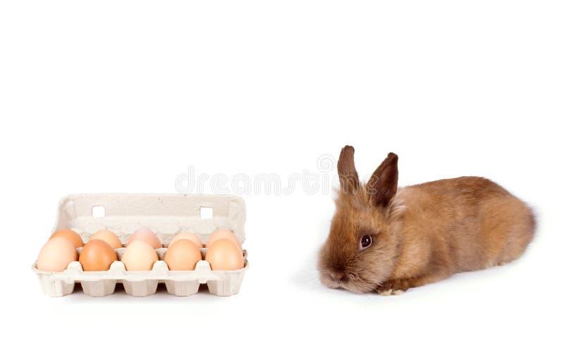 在白色的布朗兔子 免版税图库摄影